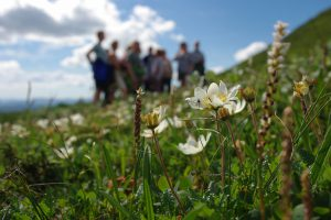 blomstervandring ansätten anneli åman