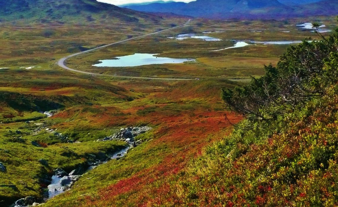 vildmarksvägen Foto: Madeleine Aaraas